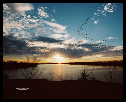 Geese over Marion County Lake